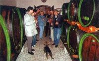 Deň otvorených pivníc | Mesto Pezinok